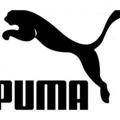 Rozmiary Puma
